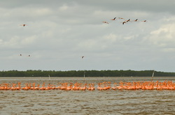 Poezdka na jekskursiju v nacional'nyj park Selestun. Ljubuemsja flamingo.
