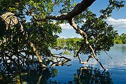 9. V dvuh sotnjah kilometrov ot kurorta Tulum raspolozheno presnovodnoe ozero Laguna Bakalar (Laguna Bacalar). Po otzyvam turistov, v nem naschityvajut do 7-mi ottenkov vody.