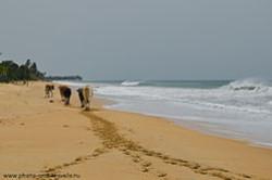 Kak nas oshtrafovali za prevyshenie skorosti lankiiskie gaishniki Otzyv o pliazhnom otdykhe na severo-vostoke SHri-Lanke v mae Pliazh Nilaveli Ekskursiia na slonovii priiut v derevne Pinnavela Pinnawala Elephant Orphanage.
