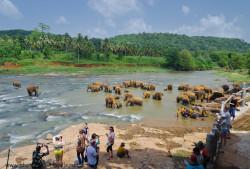 Sri Lanka. Budget poezdki samostojatelno.