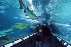 Tem turistam kto okazhetsia v finansovoi stolitse Kitaia gorode SHankhai rekomenduiu posetit odin iz krupneishikh v mire okeanariumov Fotootchet sniatyi na Nikon D5100 KIT 18-55.