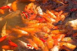 Eshche odna ekskursiia v SHankhae progulka po Sadu Radosti Kak dobratsia samostoiatelno Foto starogo goroda Old City.