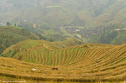 Rice Terraces Longji