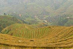 V Kitae est neskolko mest gde mozhno uvidet risovye terrasy My sieezdili v Luntszi KHrebet drakona Karta s poiasneniem kak dobratsia siuda iz Guilinia.