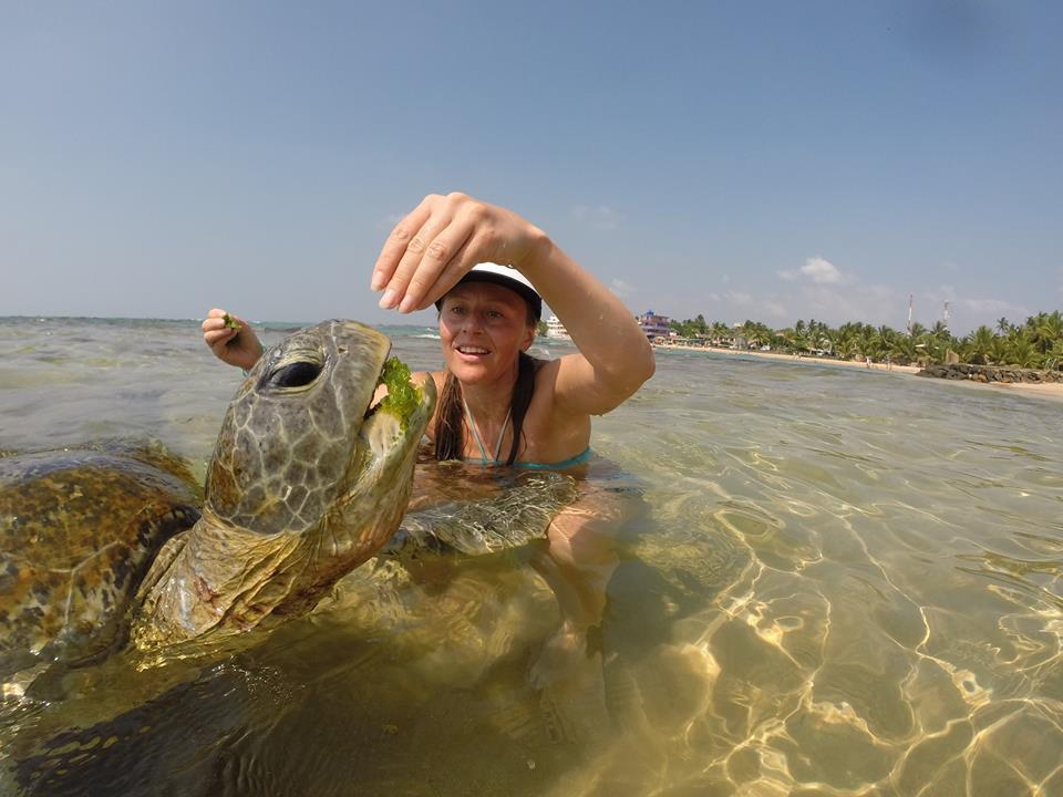 24. Покормить морскую черепаху в курорте Хиккадува на Шри-Ланке. Планирование путешествия по острову самостоятельно на арендованной машине.