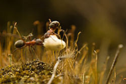 Dlia sieemki liagushek mozhno poprobovat navintit na obieektiv makrokoltsa ili makrolinzy Obzor linz Close Up s tushkoi Nikon D5100 V kommentariiakh formuly rascheta masshtaba sieemki