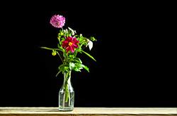 Kak fotografirovat tsvety na chernom fone pri estestvennom svete ot okna ia fotografiroval v predbannike.