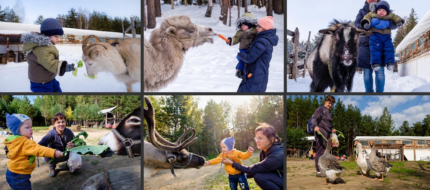 33. Если вы поехали в поход с детьми, по пути на скалы 7 Братьев можно посетить контактный зоопарк в Новоуральском КСК «Каприоль». Фотографии сняты на беззеркалку Fuji X-T10 с объективом Fujinon 16-55mm f/2.8.
