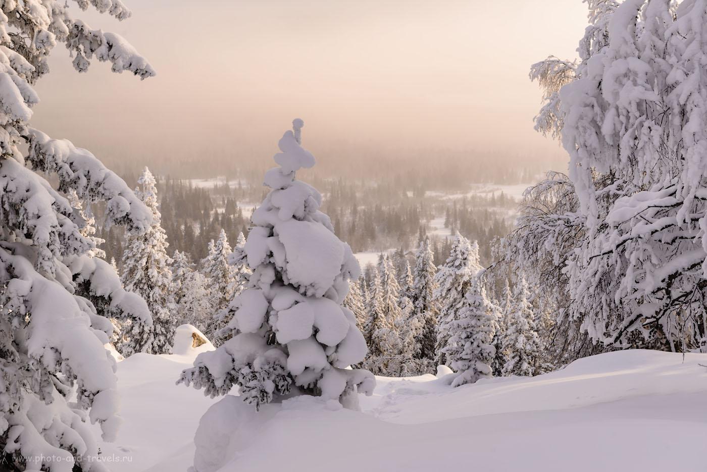 Фотография 8. Минут 20 назад мы шли между тех елей. Поход выходного дня в горы Челябинской области. Камера Nikon D610, объектив Nikon 24-70mm f/2.8. Параметры съемки: 1/160, 0.67, 9.0, 200, 52.