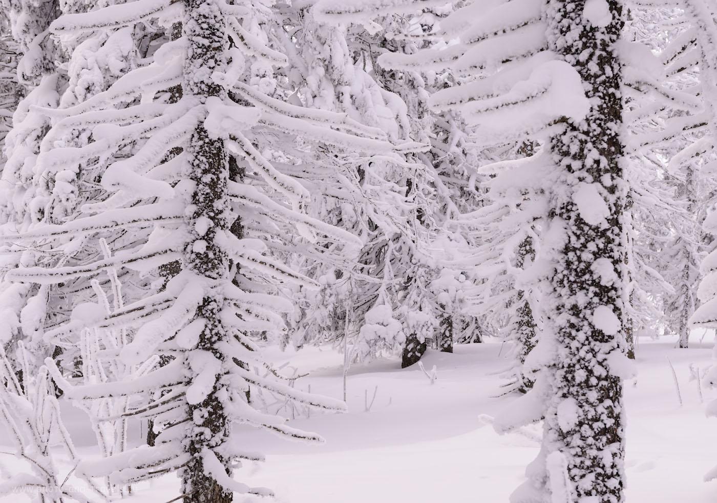 Фотография 11. Заснеженный лес в горах Южного Урала. 1/160, +0.67, 9.0, 640, 52.