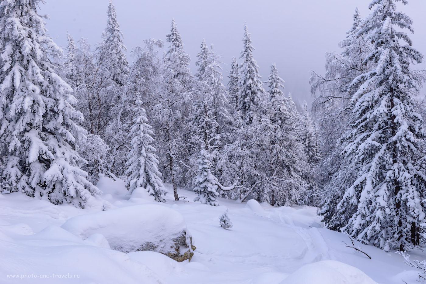 Фотография 23. Вечер в зимнем лесу. 1/160, +1.0, 10, 560, 48.