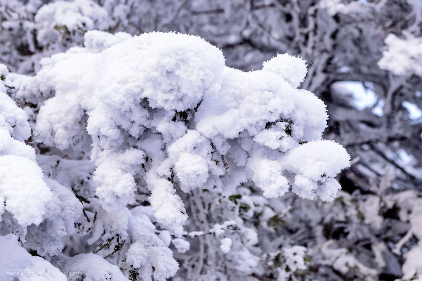 Фото 24. Тепло ли тебе, деревце? 1/160, +1.0, 6.3, 450, 70.