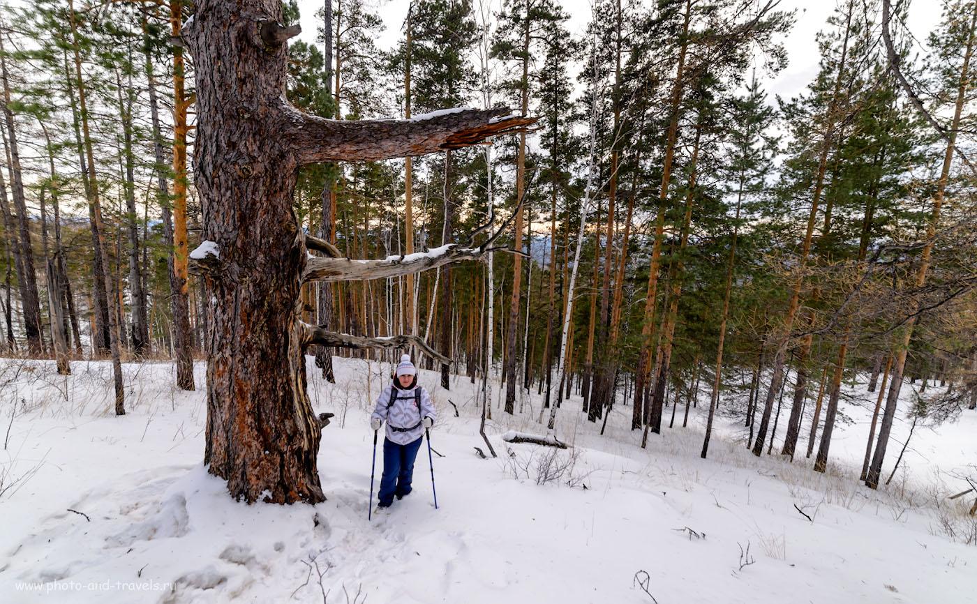 Фотография 16. Древний лес на вершине горы Сугомак. 1/200, -1.0, 9.0, 400, 14.