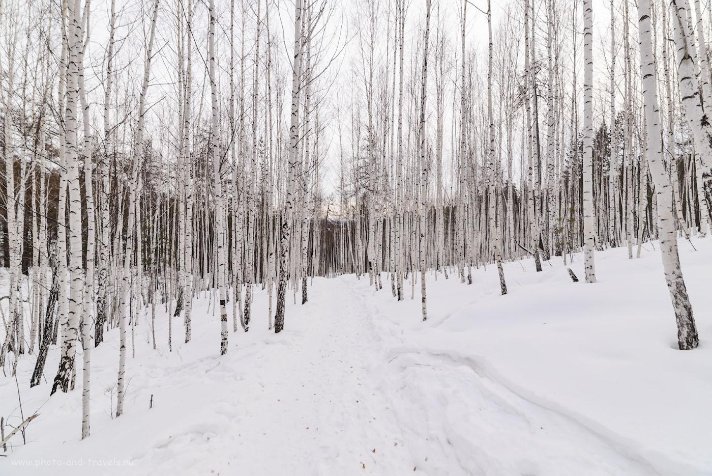 Фото 18. Березовый лес в окрестностях города Кыштым. 1/200, 8.0, 280, 14.