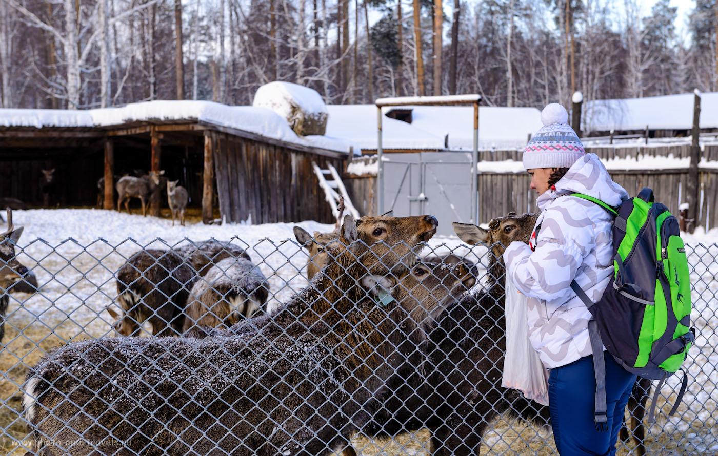 Фото 3. Оленья ферма. Рассказы об экскурсии на новогодние праздники. 1/125, 6.3, 100, 60.