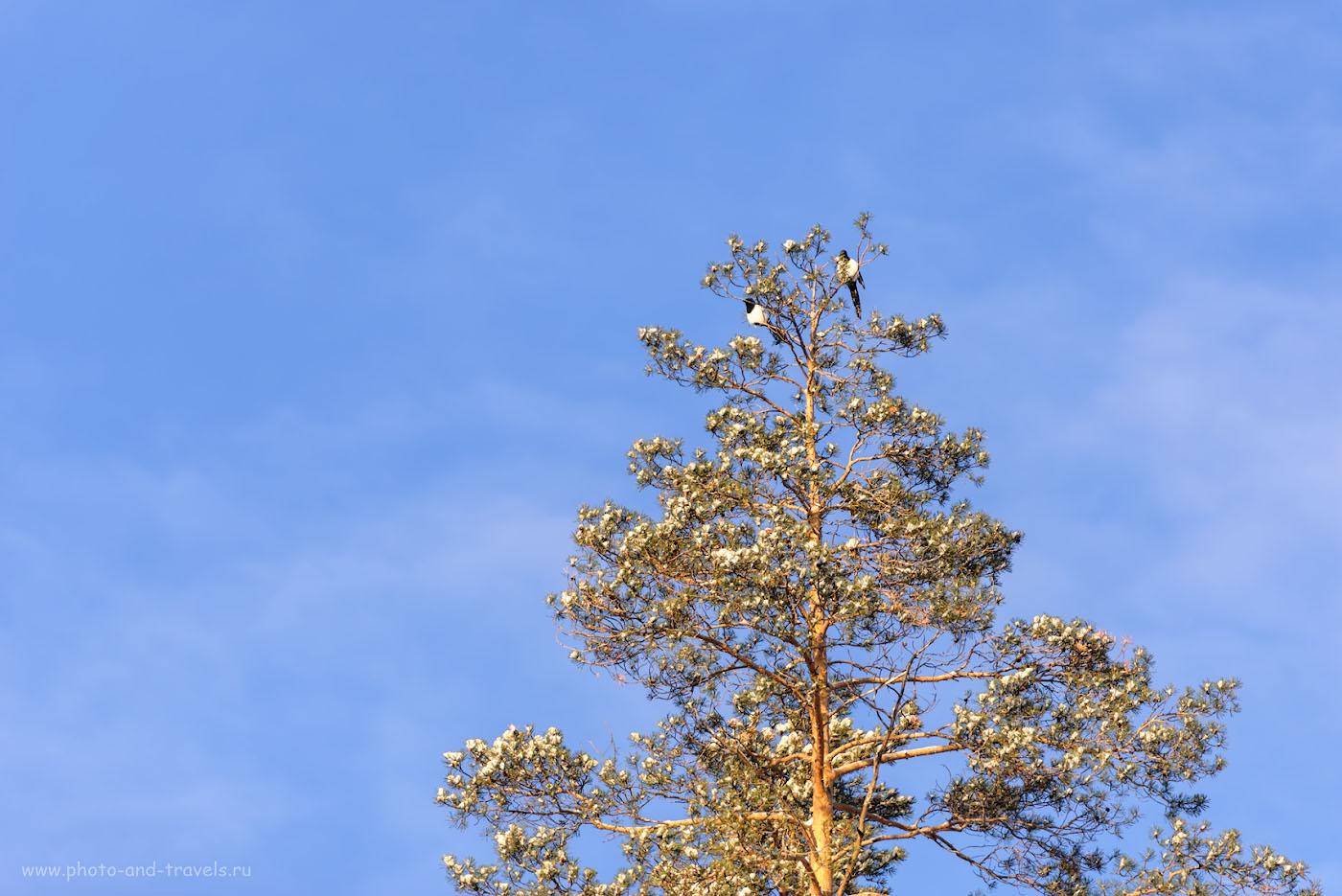 Снимок 9. Хороший день в Челябинской области. 1/1000, +0.67, 2.8, 125, 200.
