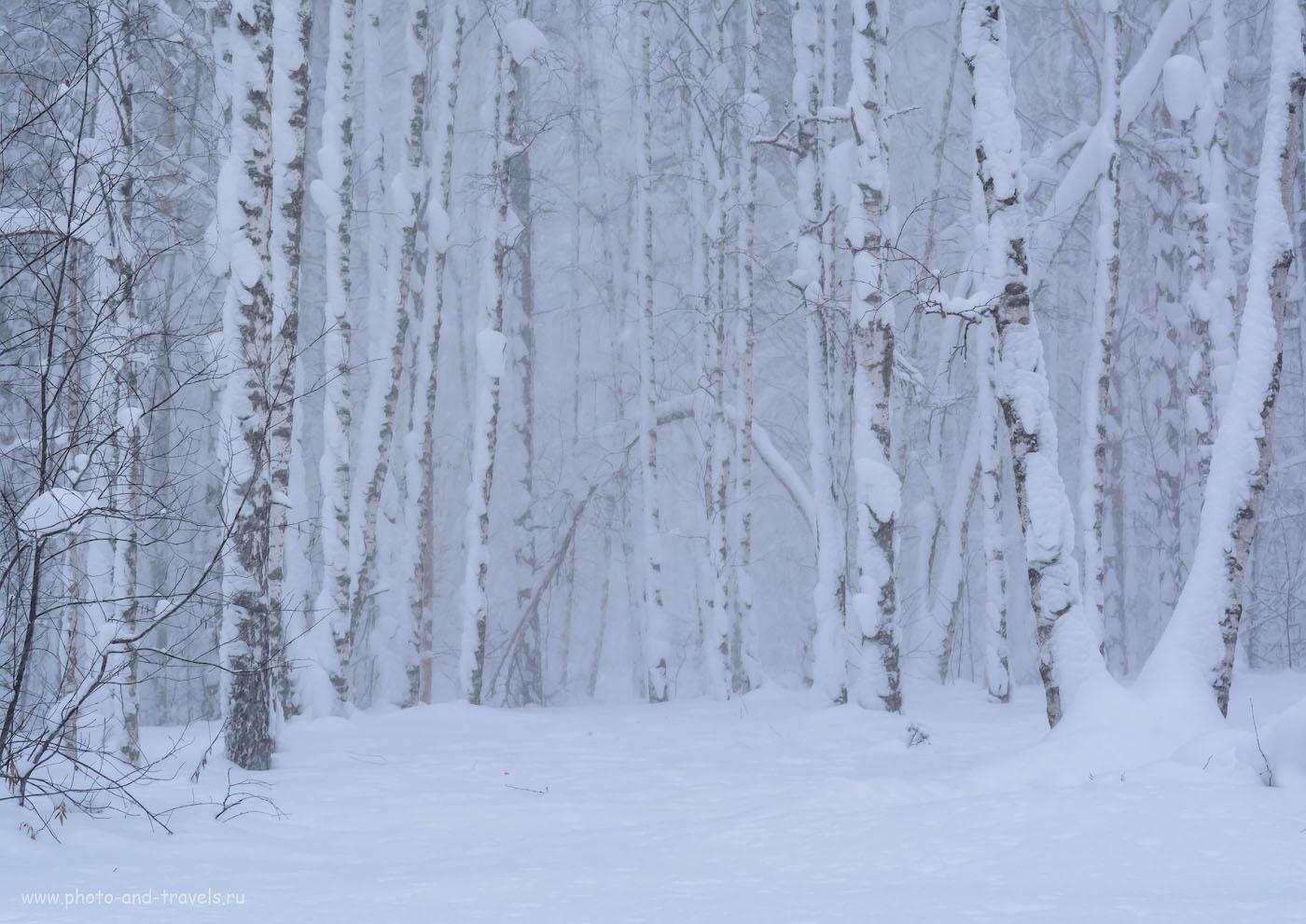 Фотография 2. Заснеженный лес, снятый на Nikon D5200 + Nikon 17-55mm f/2.8G. 1/100, +0.67, 10.0, 800, 55.