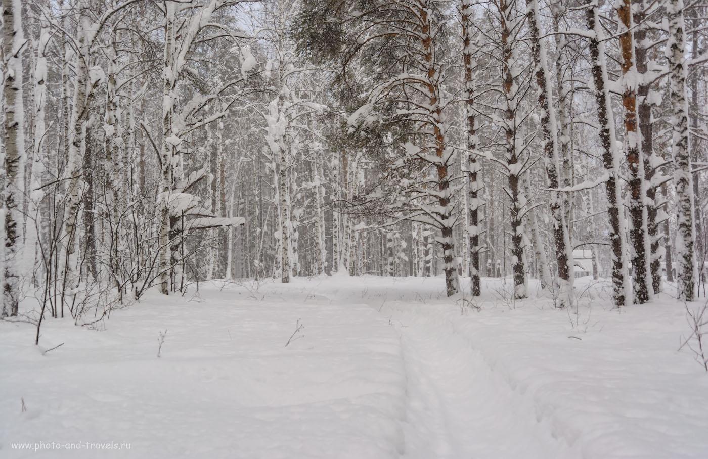 Снимок 25. Зимний пейзаж. Как не хватает этому снимку солнечных лучиков, пробивающихся сквозь заснеженные ветки! 1/200, +0.67, 2.8, 100, 26.
