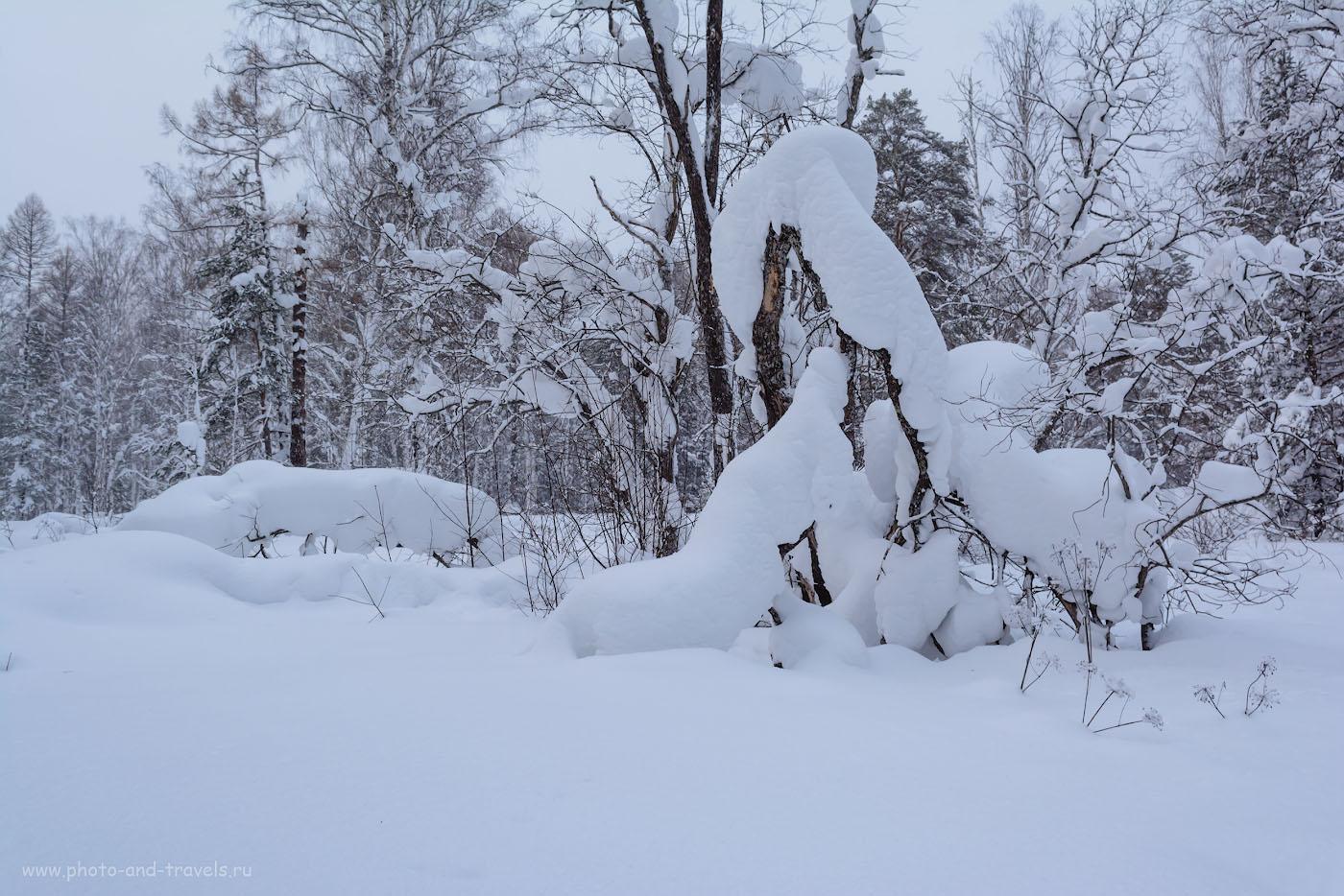 Фото 31. Зимние скульптуры. Отзывы владельцев об объективе Nikon 17-55mm f/2.8G. 1/100, 8.0, 320, 23.