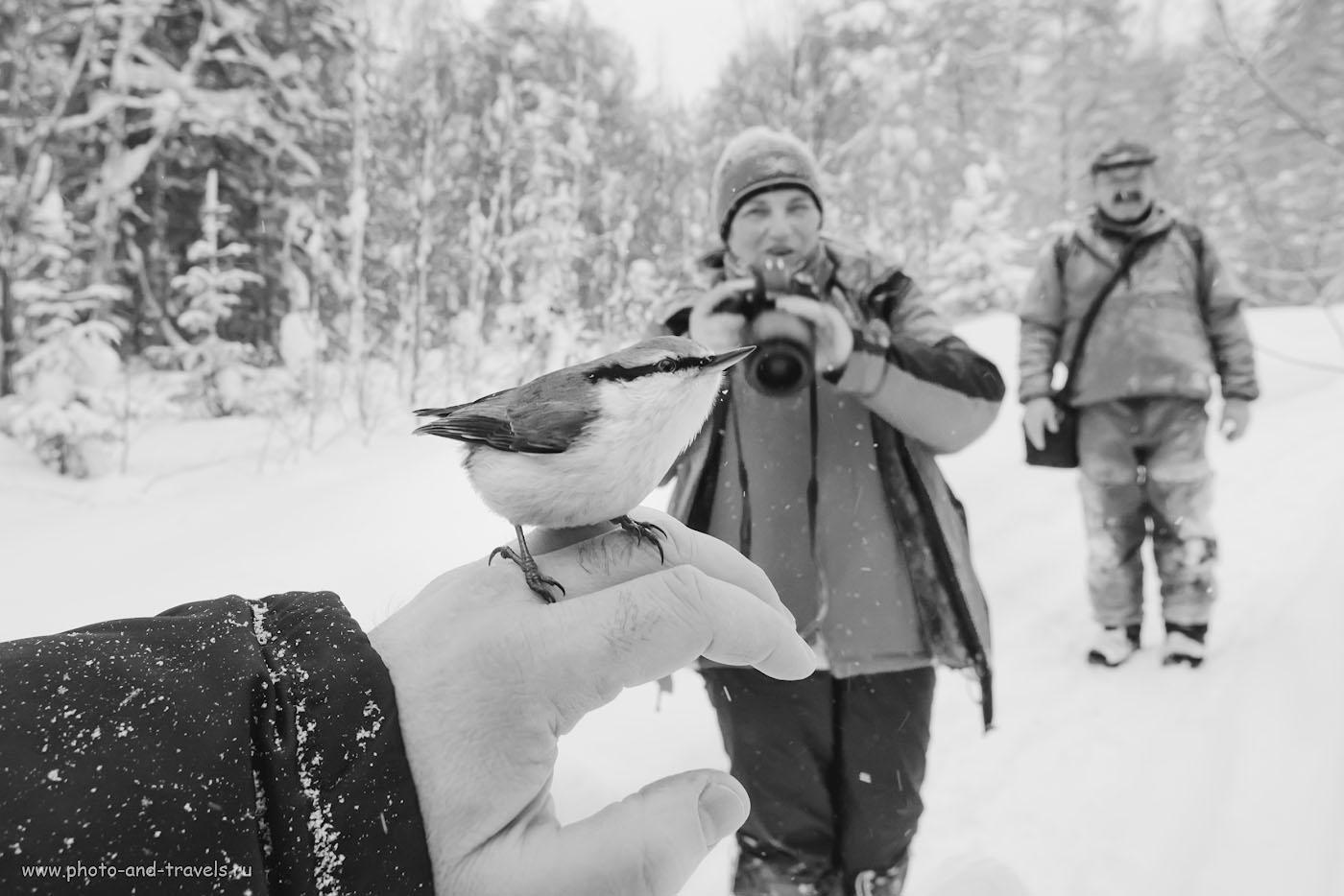 Фотография 35. Старый лесной поползень спрашивает тебя, аноним: «А ты уже поделился ссылкой на обзор Nikon 17-55mm f/2.8G со своими друзьями в соцсетях, чтобы стимулировать его автора на публикацию новых интересных материалов?»