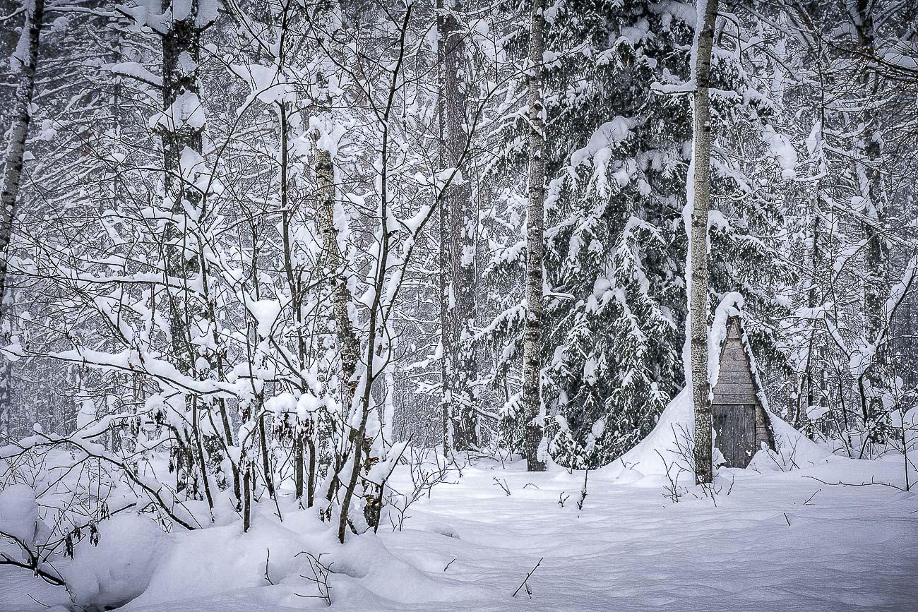 Фотография 2. Избушка в лесу. Съемка на Sony Alpha A6000 Kit 16-50. Настройки: f/11, 1/60, 100, -1.0EV, 50mm.