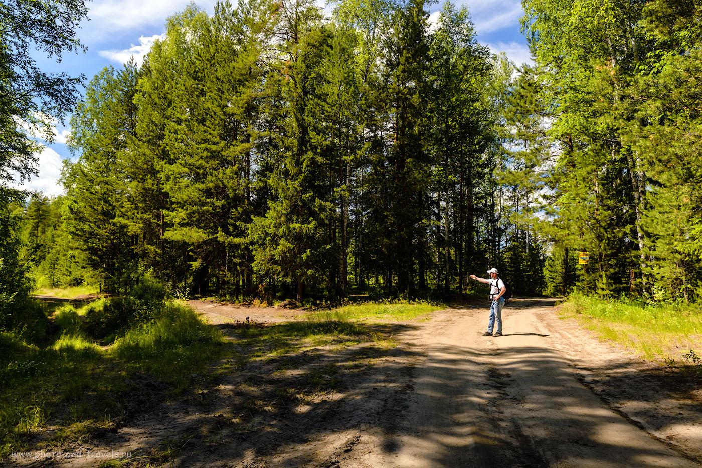Фотография 5. Чуть пройдете и упретесь в сады. Вам – левее, на узкую лесную дорогу. Развилка «Б». 1/125, -1.0, 8.0, 100, 24.