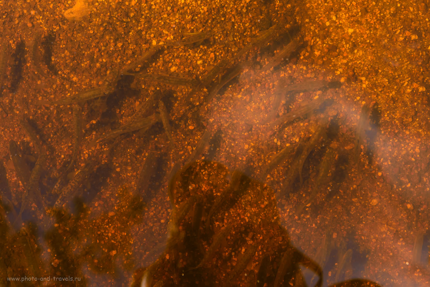 Фото 15. Летом речка обмелела, осталась лишь небольшая лужица с сотней мальков. 1/100, -1.33, 8.0, 450, 70.