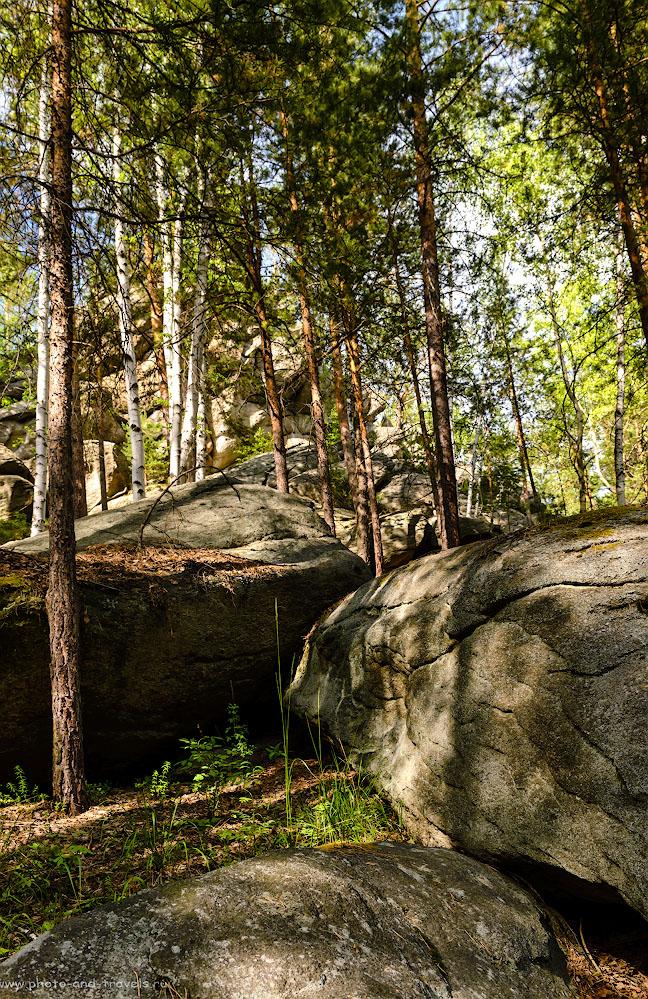Фото 25. В уральском лесу. 1/100, -1.33, 8.0, 500, 24.