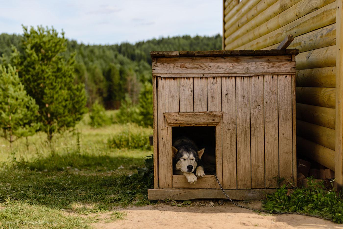 Фото 13. Сторож на оленьей ферме. Отчет об экскурсии в Висим. 1/640, -0.33, 2.8, 100, 55.