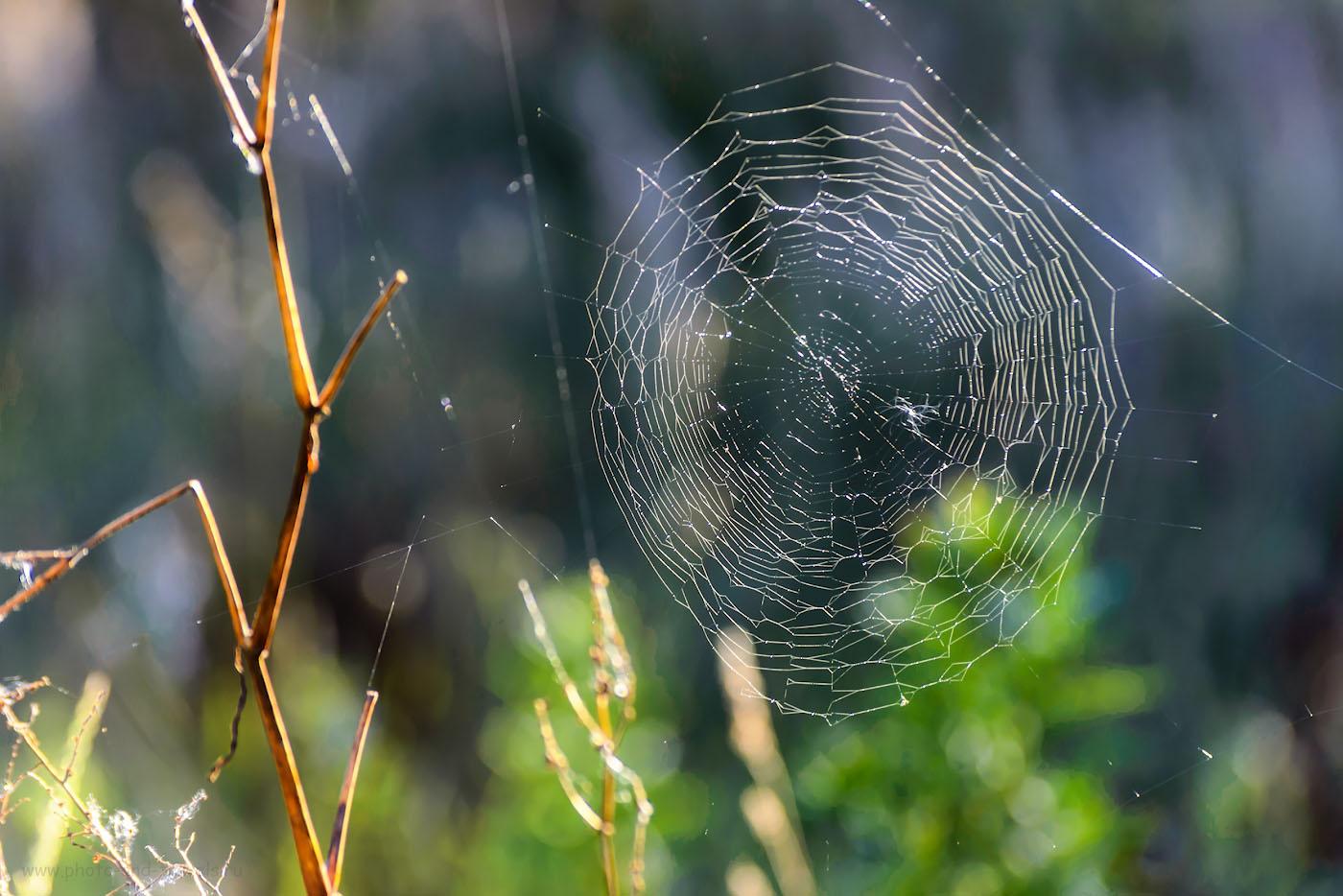 Снимок 18. Такую бы паутину да на рассвете найти.