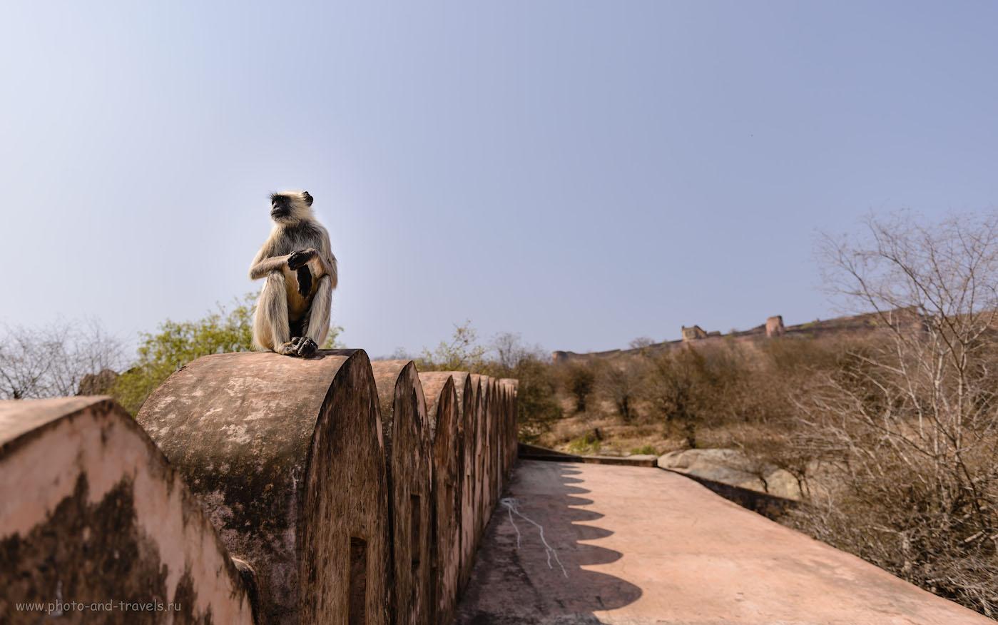 Фотография 6. На крепостной стене по пути от форта Амбер к Джайгарху. Отзывы об экскурсиях в Джайпуре самостоятельно. 1/1600, +0.33, 3.5, 100, 28.