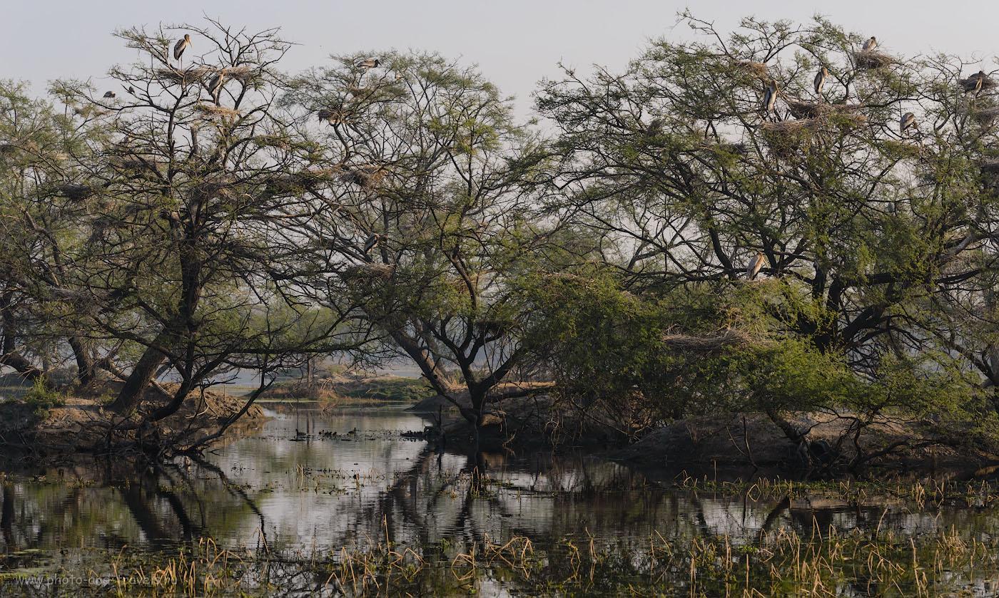 Фотография 8. Индийские клювачи на болоте в заповеднике Кеоладео. Отзывы туристов об отдыхе в Индии самостоятельно. Полный кадр Nikon D610 + телеобъектив Nikon 70-200mm f/2.8 + экстендер Nikon TC-14E II. Настройки: 1/400, -0.67, 7.1, 180, 100.