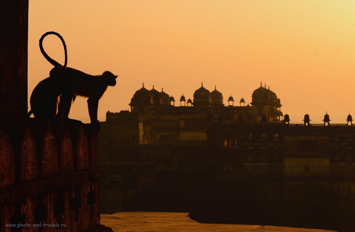 Фотография 11. Встречаем рассвет на крыше храма Чатурбхудж Мандир. Вид на дворец Джахангир-Махал (Jahangir Mahal). Отзывы туристов о поездке в город Орчха. 1/200, -1.33, 13.0, 220, 100.