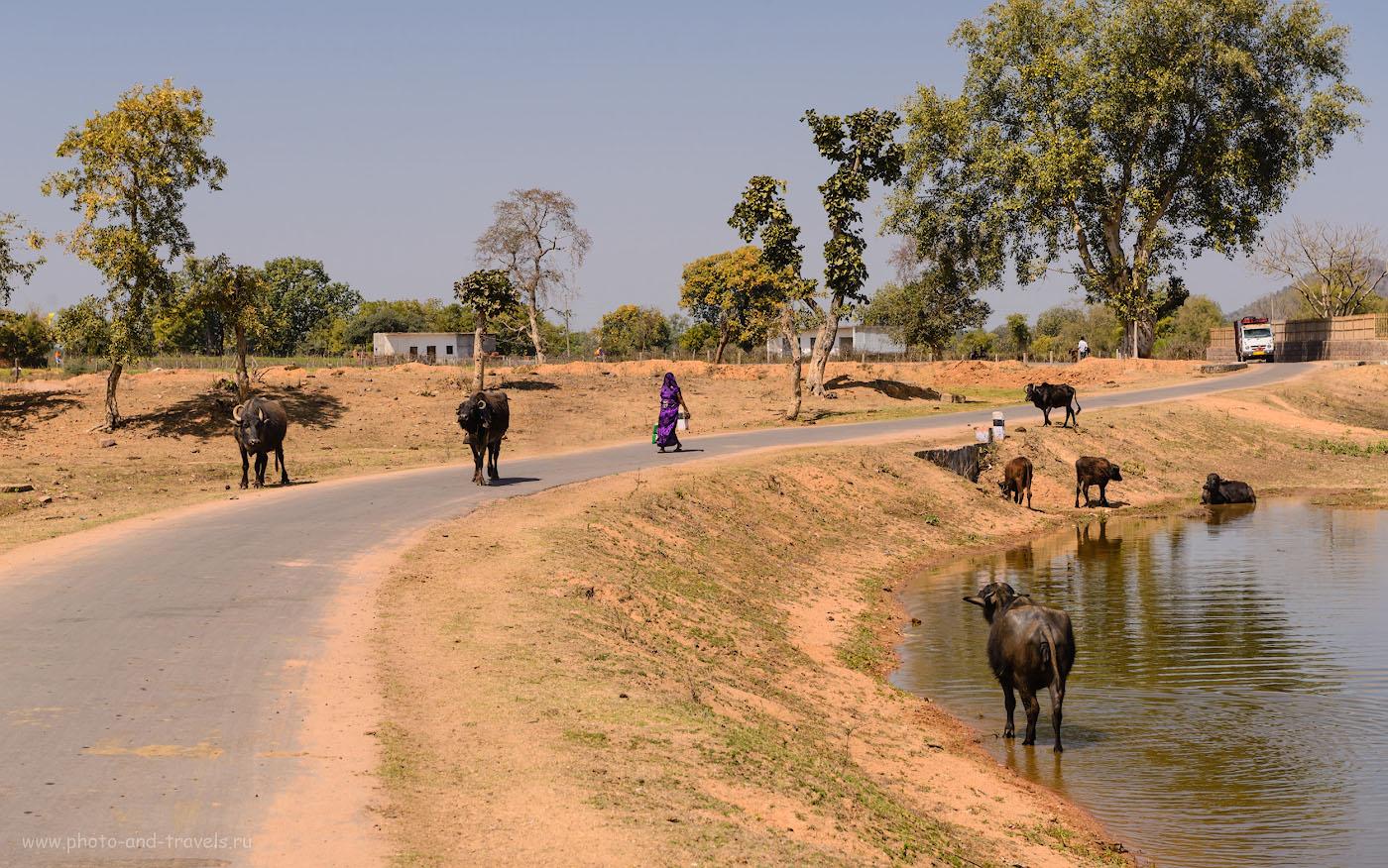 Фотография 17. В одной из деревень в окрестностях Кхаджурахо. Отчеты туристов об отдыхе в Индии в феврале. 1/320, -0.33, 9.0, 100, 66.