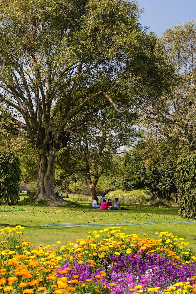 Фотография 11. Парк на территории форта Пурана-Кила. Интересные места в Дели. 1/160, -0.33, 14.0, 400, 70.