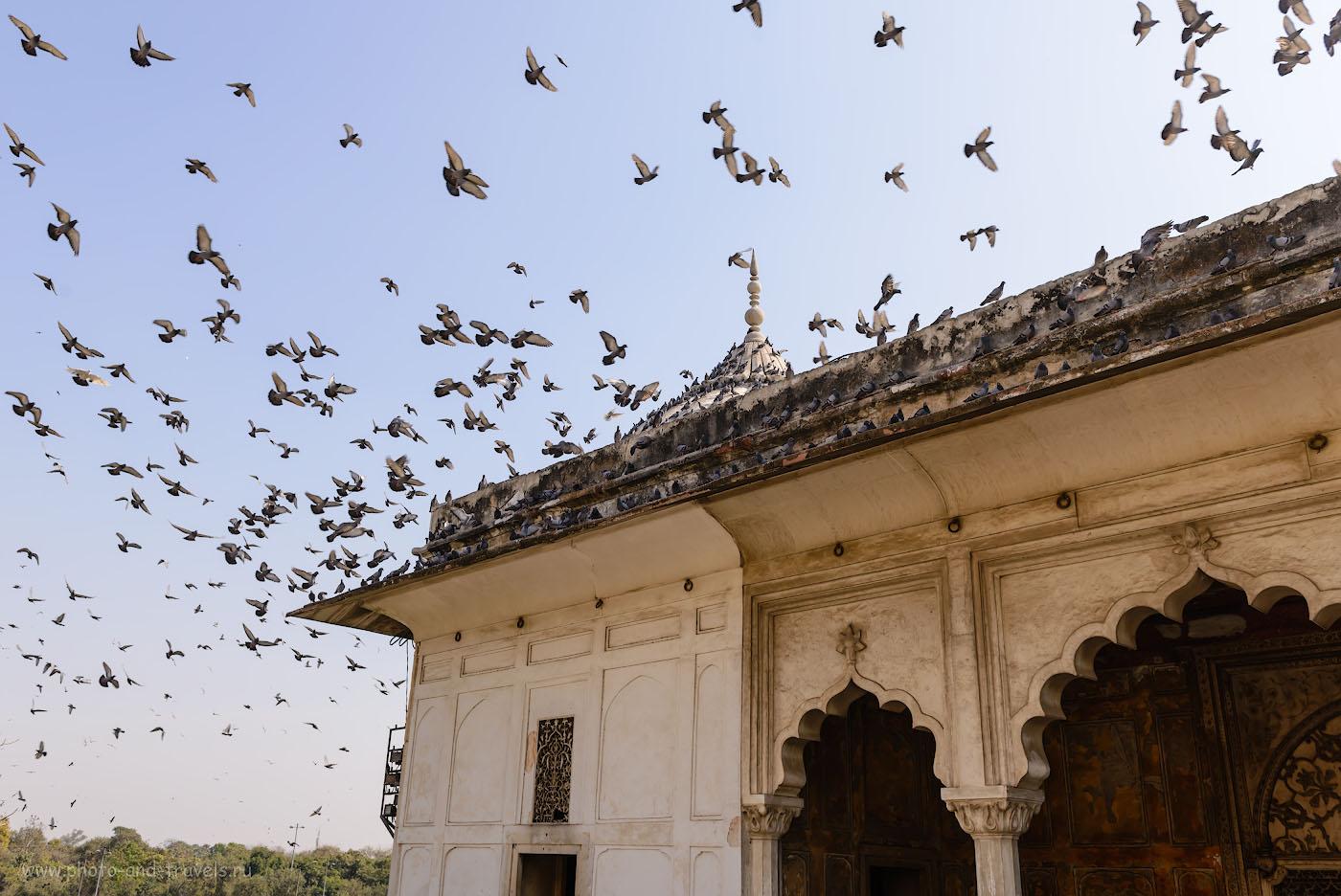 Фото 19. Во многих известных местах Индии можно встретить тучи голубей. 1/320, 7.1, 100, 29.