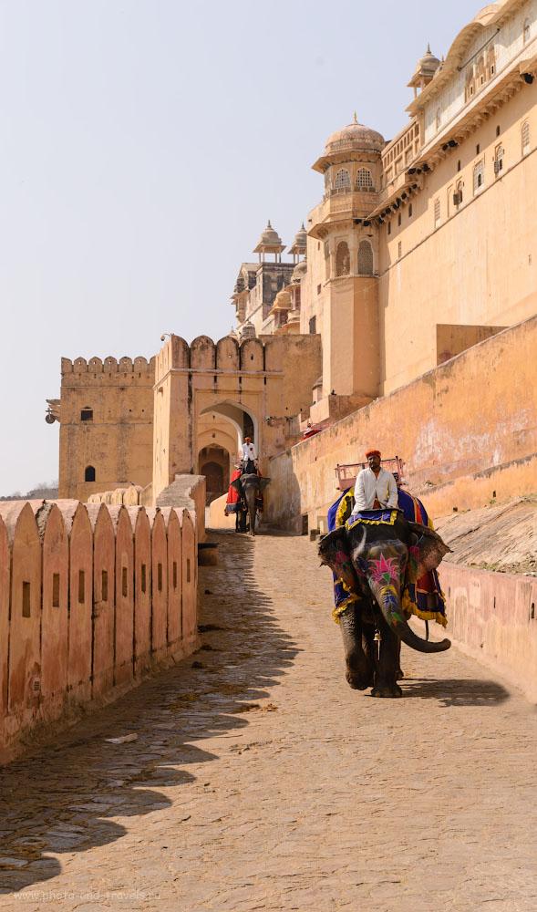 Фото 5. Слоны под стенами крепости Амбер. Отчет о самостоятельных путешествиях по Индии. 1/320, 8.0, 100, 70.