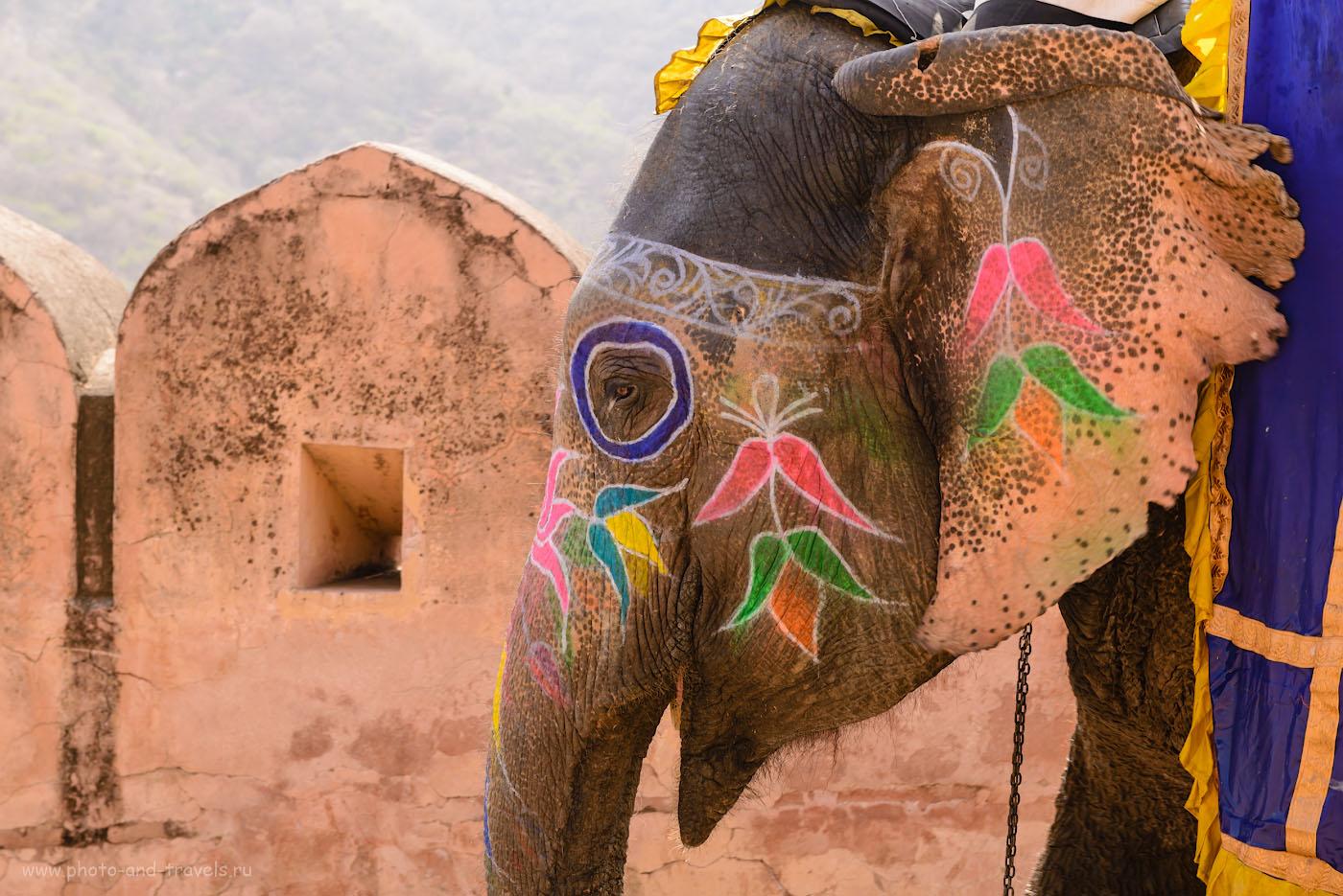 Фотография 6. Слышал сказку про белого слона, песню про розового, а вот, про цветного не слыхал… 1/160, 8.0, 250, 70.