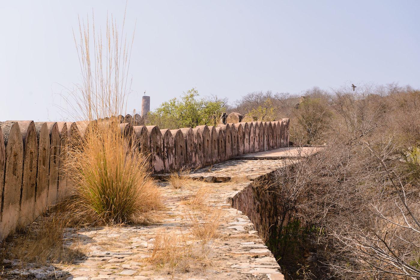 Фото 13. Обезьяна на крепостной стене. Отзыв о восхождении к форту Джайгарх в Джайпуре. 1/250, -0.33, 8.0, 100, 70.