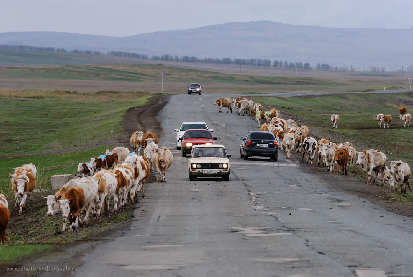 Фото 5. Путешествуя по Башкирии, возможно, придется преодолеть брод через «коровью реку». 1/320, -0.67, 7.1, 250, 200.