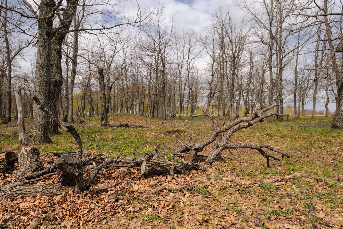 Фото 6. Такую дубовую рощу мы увидели, когда съездили отдохнуть в Башкирию. Камера Nikon D80, объектив Nikon 17-55mm f/2.8. Настройки: 1/250, -1.33, 9.0, 100, 17.