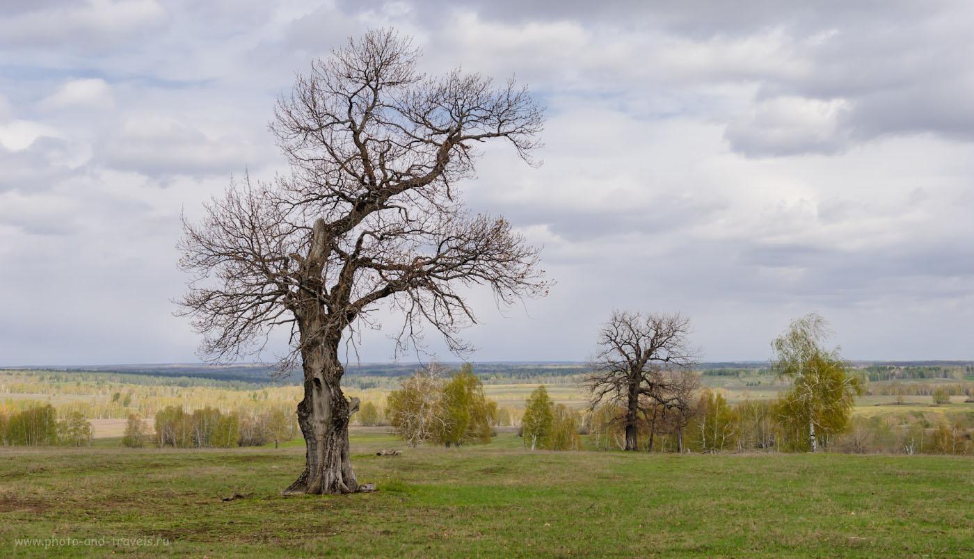 Фотография 7. Отправляясь в автомобильное путешествие по Башкирии, можно надеяться увидеть дубы. 1/250, -0.33, 8.0, 100, 34.