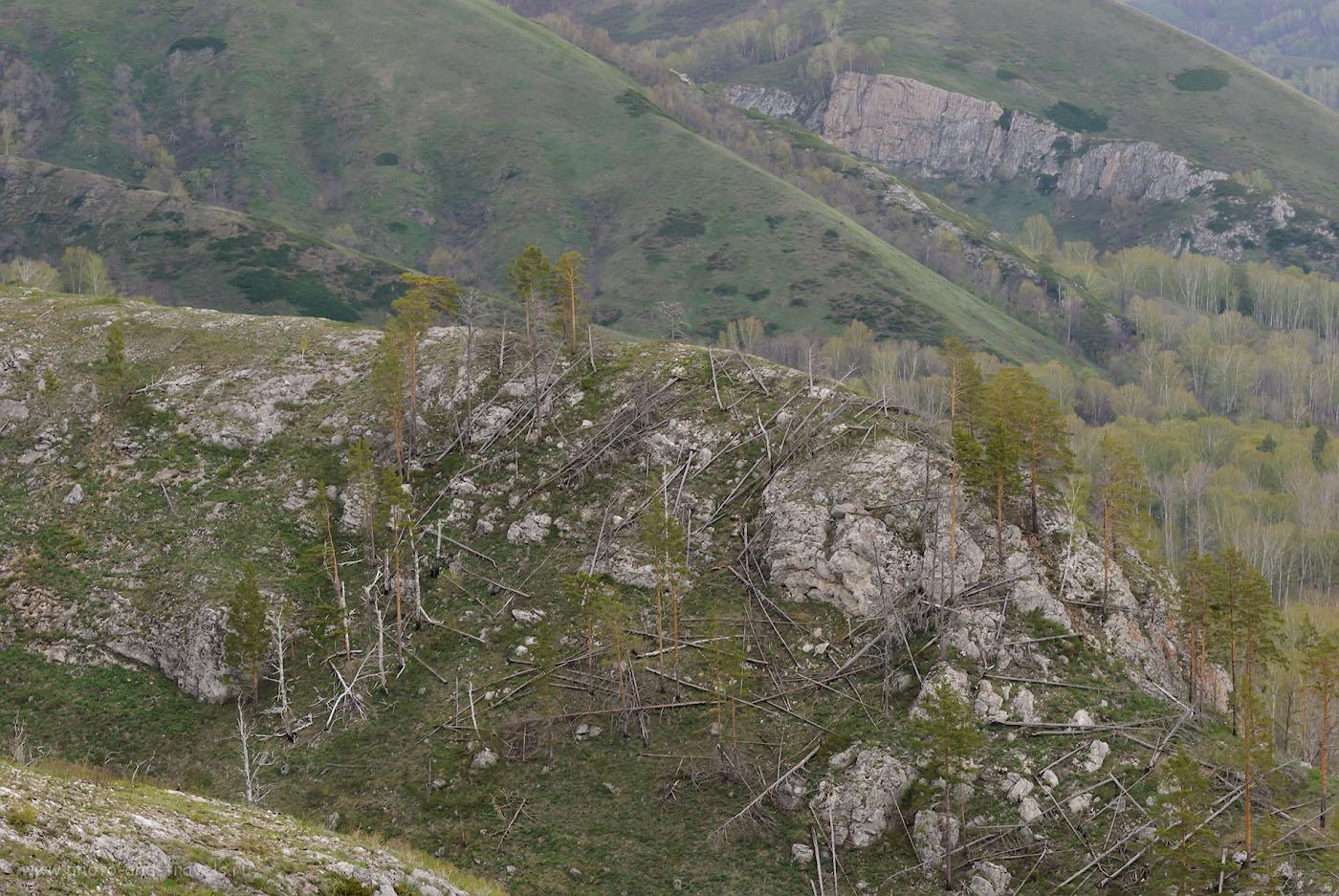 Фото 20. Поваленные деревья - как спички… Такие здесь ветра бывают! 1/80, 8.0, 320, 116.