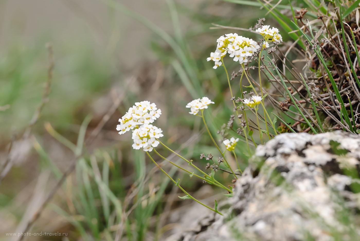 Снимок 22. Цветы на скалах. Поехать отдохнуть в Башкирию и забыть обо всём. 1/160, -0.33, 8.0, 500, 190.