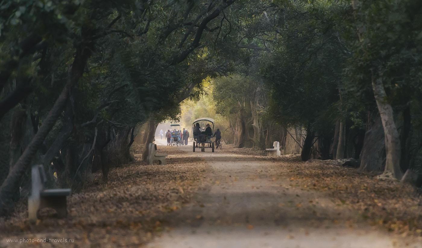 Фотография 4. Центральная дорожка в заповеднике Кеоладео. Все спешат к болотам, где находится Мекка фотоохотников. 1/640, -0.67, 4.0, 6400, 280.