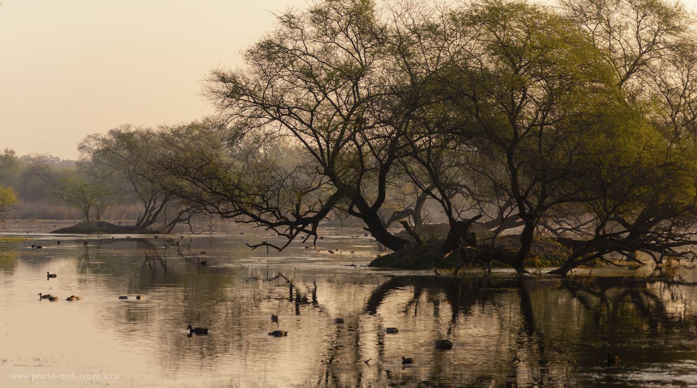 Снимок 9. Отзыв об экскурсии в национальный парк Кеоладео во время самостоятельного путешествия по Индии. 1/400, -0.67, 4.0, 100, 100.