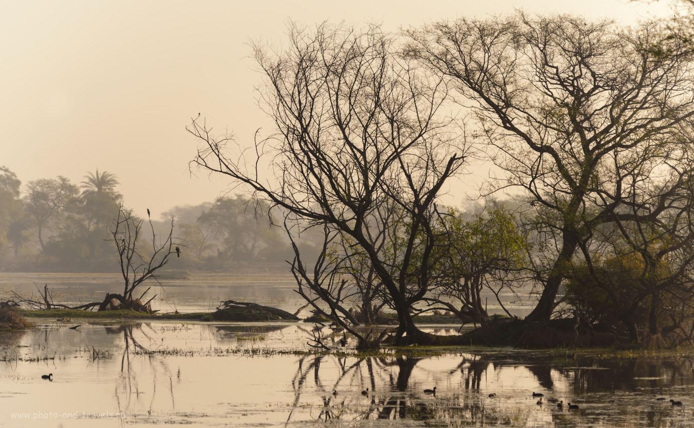 Снимок 16. Ландшафты парка Кеоладео. Отзывы фотографов о фотоохоте в Индии. 1/800, 4.0, 100, 160.