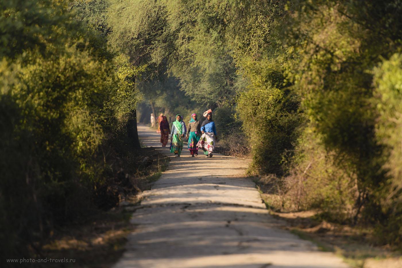 23. Отчет об экскурсии в заповедник Кеоладео самостоятельно. Путешествие в Индию в феврале. 1/1250, 4.0, 500, 280.
