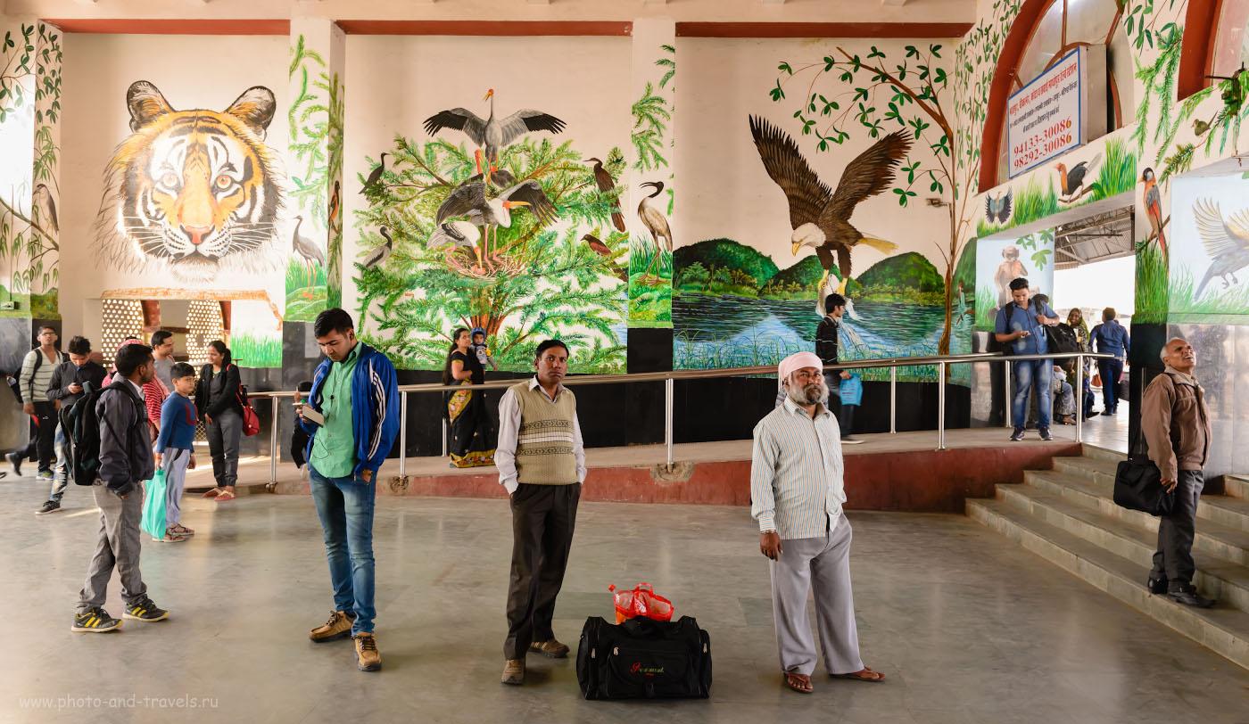 Фото 35. Каждый фотолюбитель, приезжающий на фотоохоту в Бхаратпур, с порога понимает, что его ждет в заповеднике. Снято на Nikon D610 + Nikon 24-70mm f/2.8. Настройки: 1/60, 7.1, 900, 27.