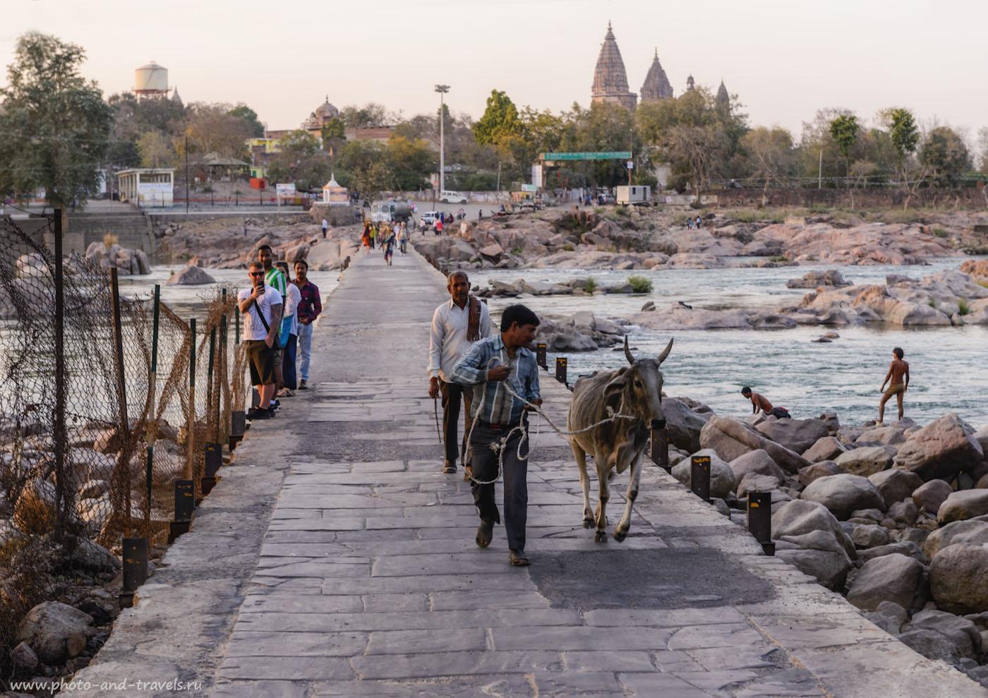 Фотография 5. Сценка из жизни Орчхи. Мост через реку Бетва. Поездка в Индию самостоятельно. 1/160, -0.67, 6.3, 320, 62.